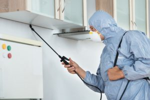 Pest Control Helensvale